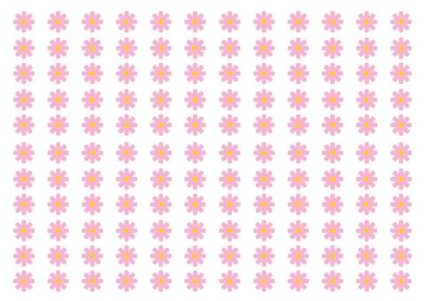 Pink Cosmos wallpaper