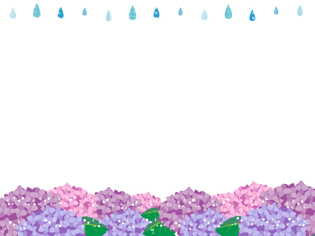 Hydrangea of hydrangea 2