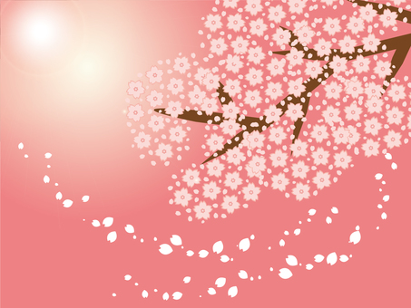 Wallpaper (cherry tree and light)