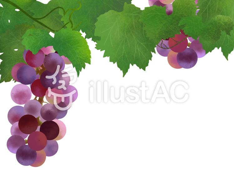 【フリーイラスト素材】葡萄(紫)フレーム