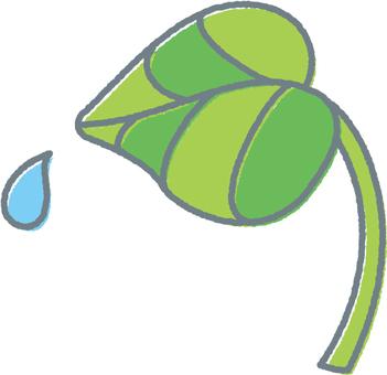 【Rainy season】 Leaves and water drops