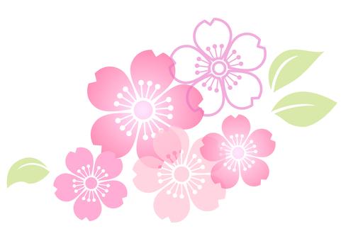 Cherry blossom material 149