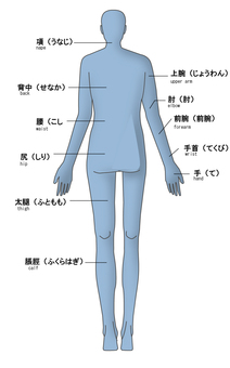 Name of the body part of the back Rear (English)