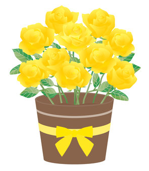 Rose_potted 01 yellow