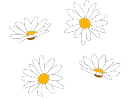 Margaret white flowers only