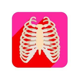 Organs 60
