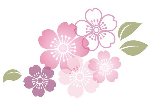 Cherry blossom material 148