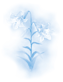 Light brown light blue