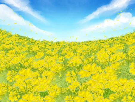 노란 꽃밭