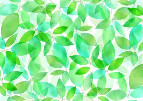 Fresh green material 56