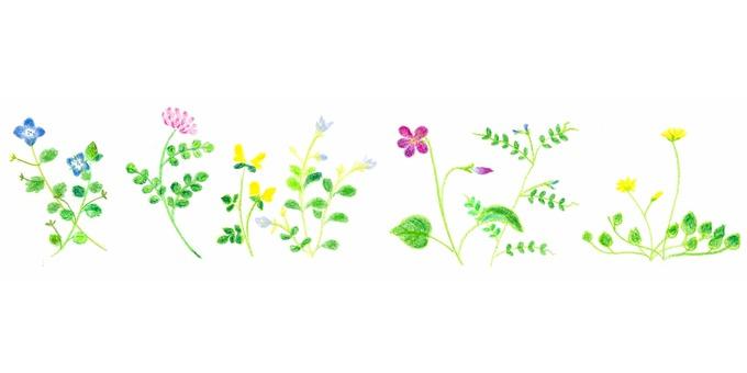 Wild flower series ~ line ~