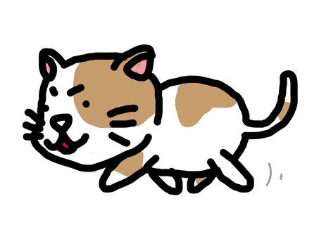 Bruch cat, walking