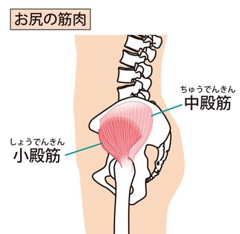 Ass muscles