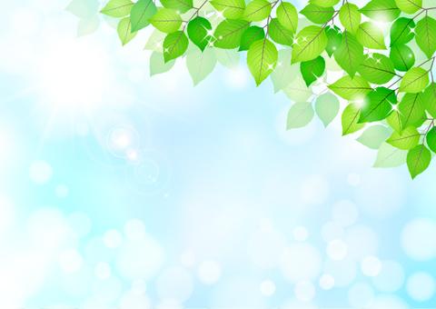 Fresh green material 217