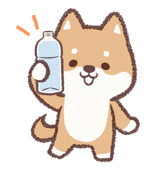 Pet bottle dog
