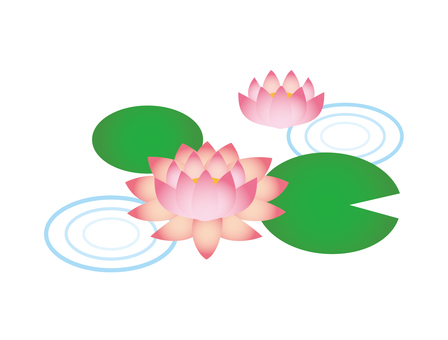 Water lily 01