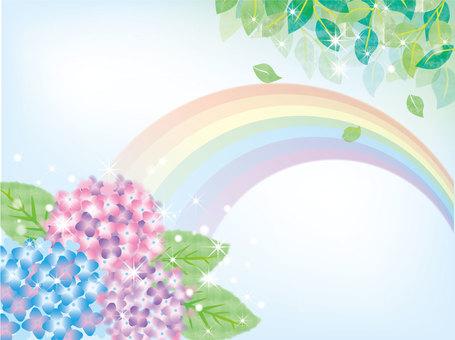新鮮的繡球花和彩虹
