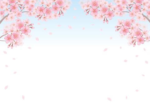 벚꽃의 프레임 28