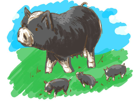 Parent and young black pigs taking a walk in the meadow