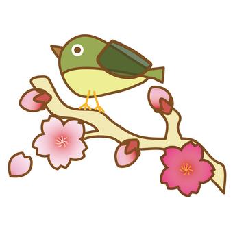 벚꽃과 메지 2