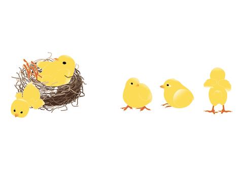 Hina and nest