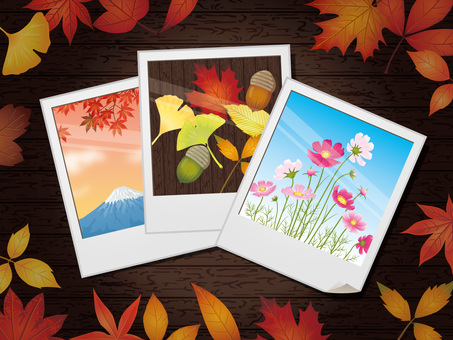 Polaroid photograph in autumn (autumn leaves / cosmos) Background