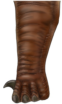 Large dinosaur feet