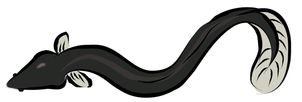 Eel 001