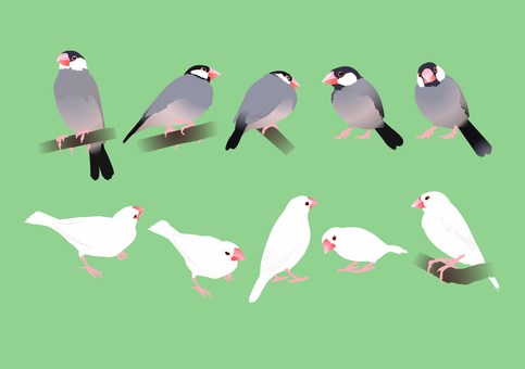 Sentencebird 1