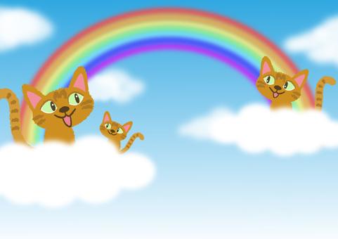 cat_ blue sky and cat 3