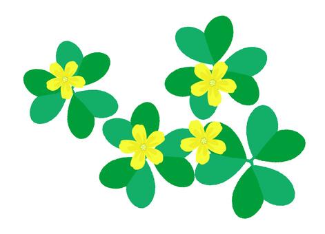 꽃 소재 괭이밥 꽃과 잎