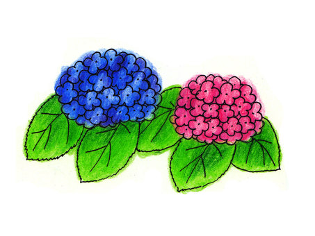 繡球花(第二部分)