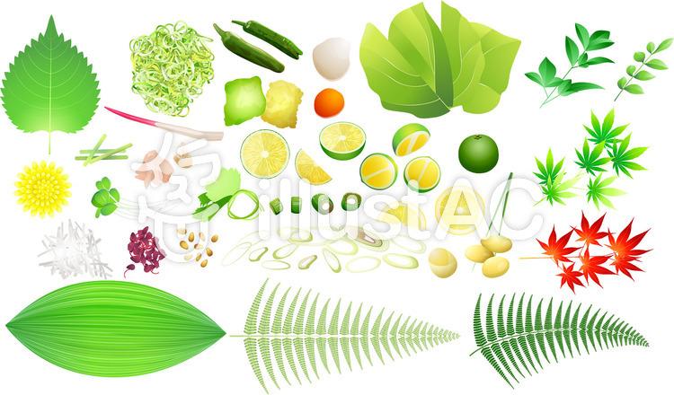 料理の薬味・葉物セットのイラスト