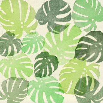 몬스 테라 잎 배경 패턴