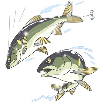 Ayu Tomo Fishing