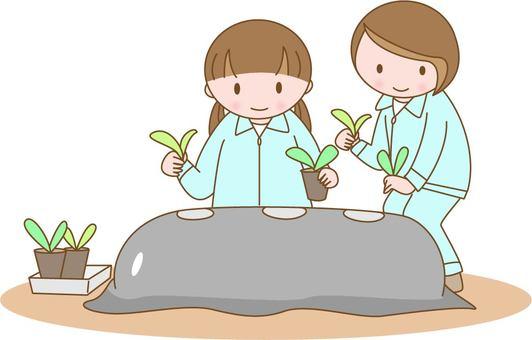 Planting of seedlings