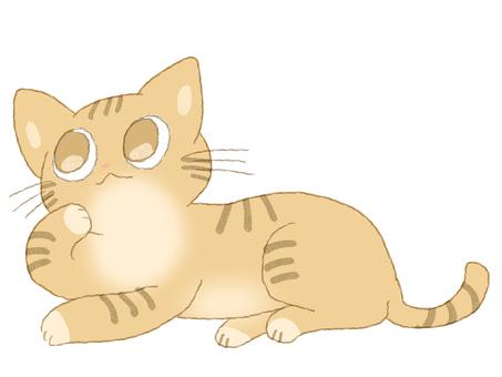 차 호랑이 고양이 턱