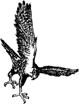 Hawk (taka)