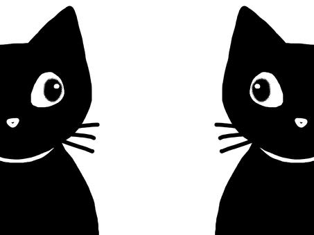 Cat black cat animal pet monotone