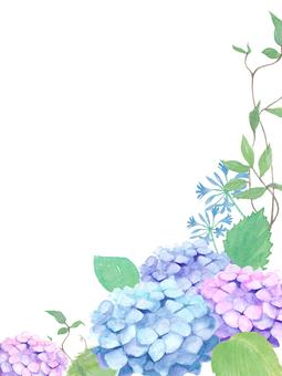 Fresh frame hydrangea