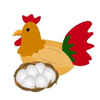 닭과 계란