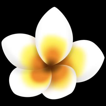 프르 메리아의 꽃