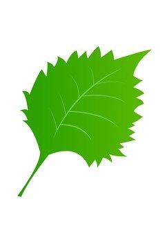 Leaf 21