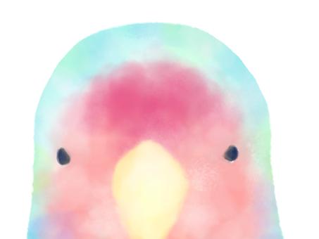 Kozakura parakeet