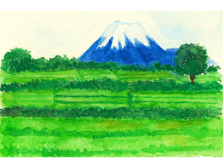 Mount Fuji and tea plantation