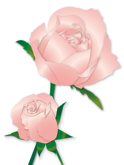 Two roses of pink roses