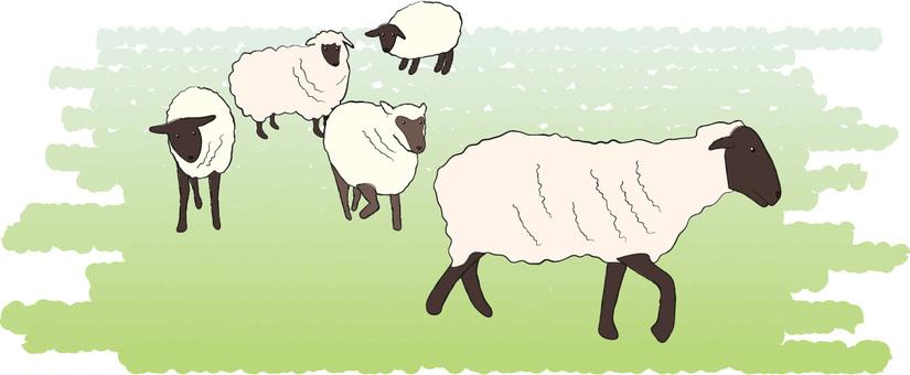 Sheep sheep ranch livestock hair breeding