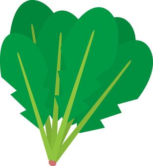 Food Series Vegetable Spinach