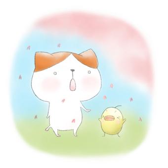 Sakura blooms ★