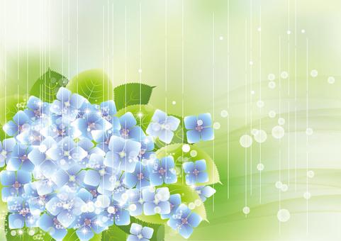 Hydrangea 3 in the rain